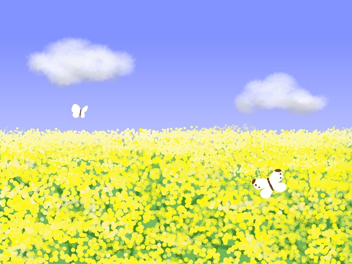 菜の花 景色 自然 背景 イラスト フリー Wwwthetupiancom