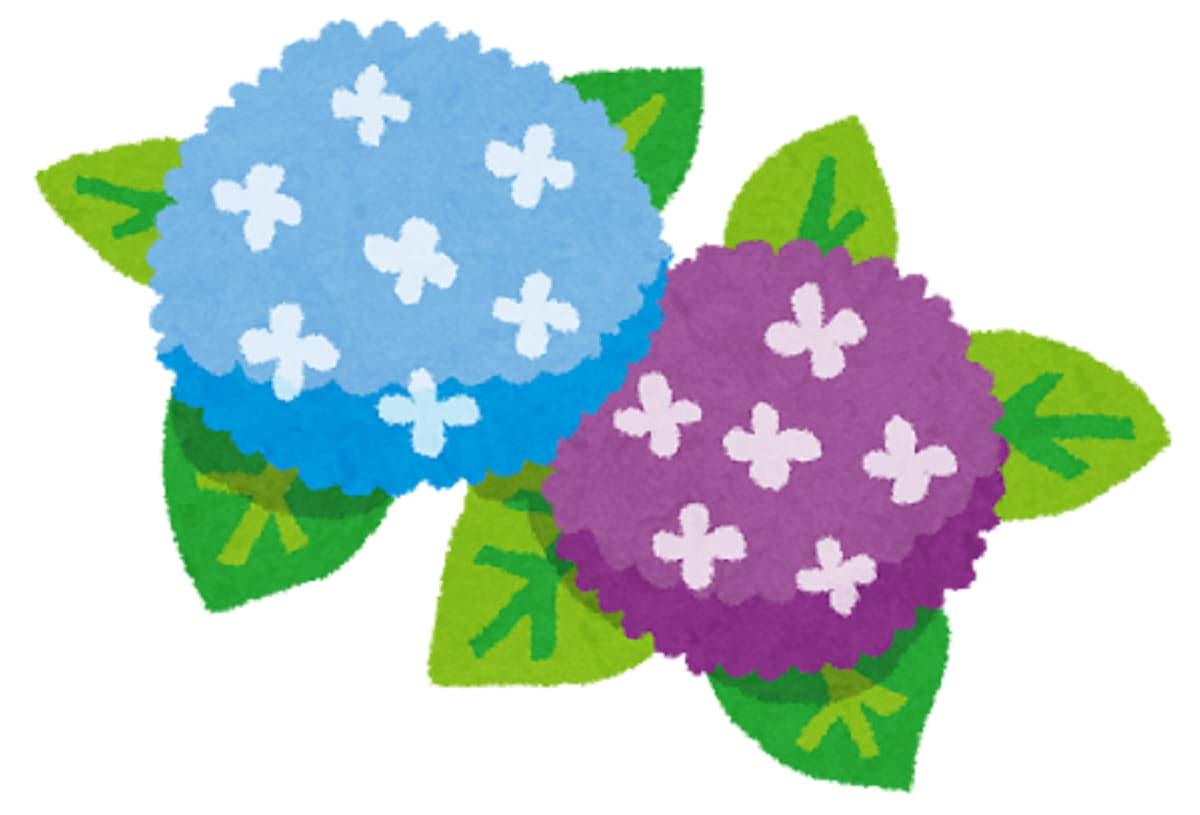 紫陽花あじさいの無料フリーイラスト かわいい無料イラスト
